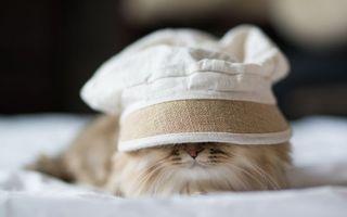 Бесплатные фото кот, морда, усы, шерсть, кепка, постель, шапка