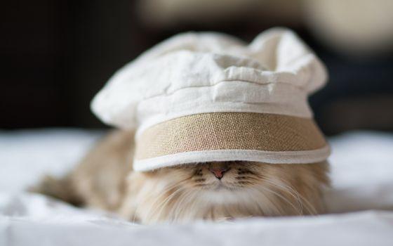 Бесплатные фото кот,морда,усы,шерсть,кепка,постель,шапка