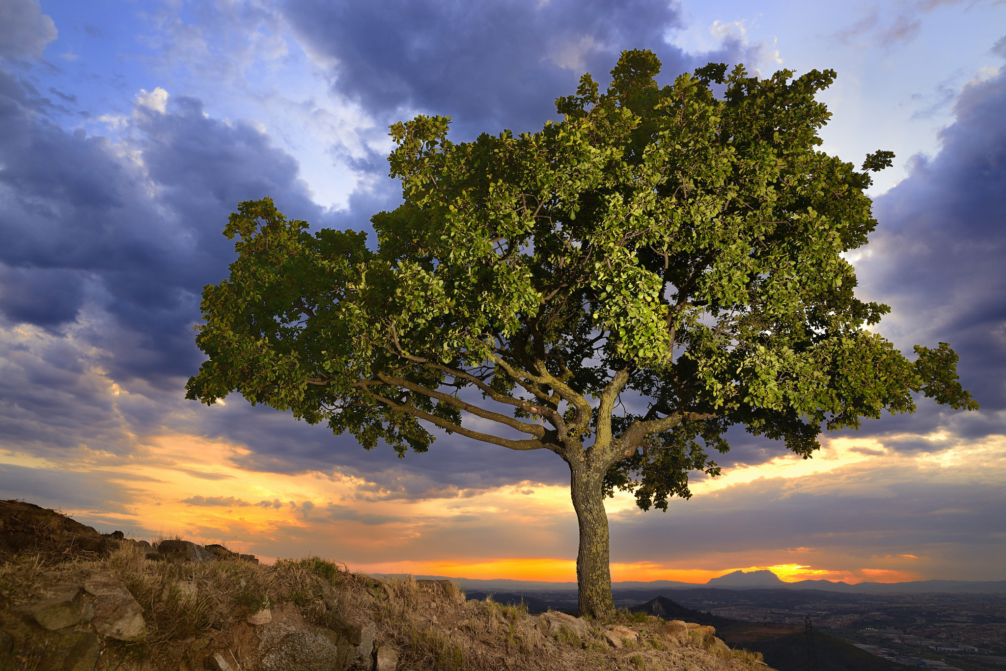 обои закат, горы, дерево, небо картинки фото