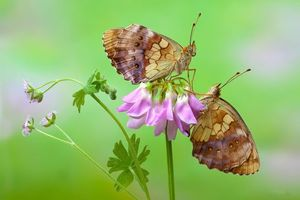 Photo free flower, butterfly, macro
