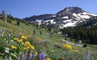 Бесплатные фото горы,трава,цветы,деревья,вершины,камни,снег