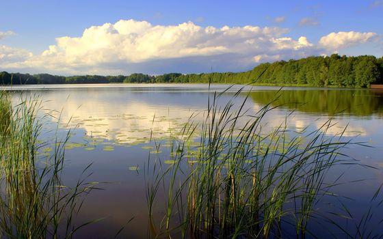 Фото бесплатно озеро, гладь, камыши