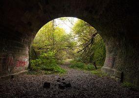 Бесплатные фото тонель, лес, деревья, тропинка, пейзаж