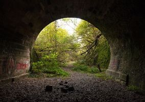 Photo free tunnel, forest, trees