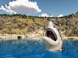 Фото бесплатно арт, улыбка, акула