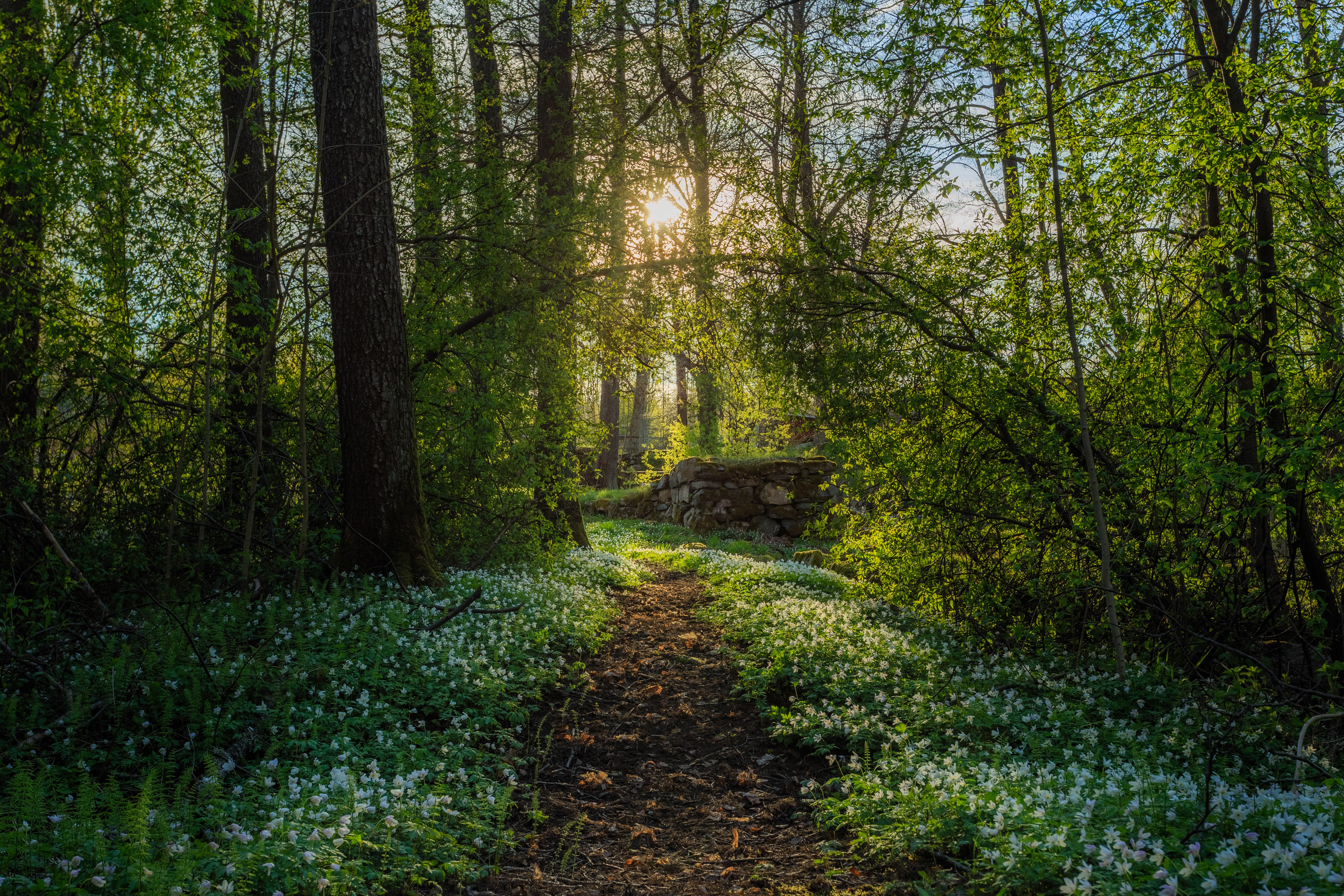 Арвика, Швеция, лес