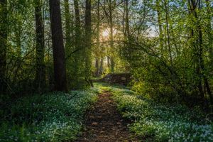 Бесплатные фото Арвика,Швеция,лес,парк,тропинка,деревья,пейзаж