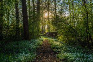 Фото бесплатно Арвика, Швеция, лес