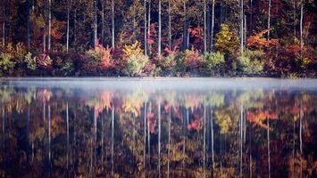Фото бесплатно дымка, деревья, озеро