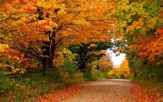 Бесплатные фото осень,дорожка,трава,деревья,листва,цветная