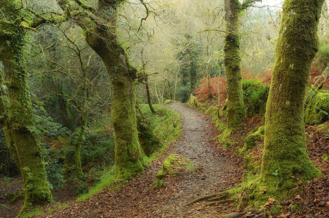 Фото бесплатно лес, деревья, тропинка - на рабочий стол