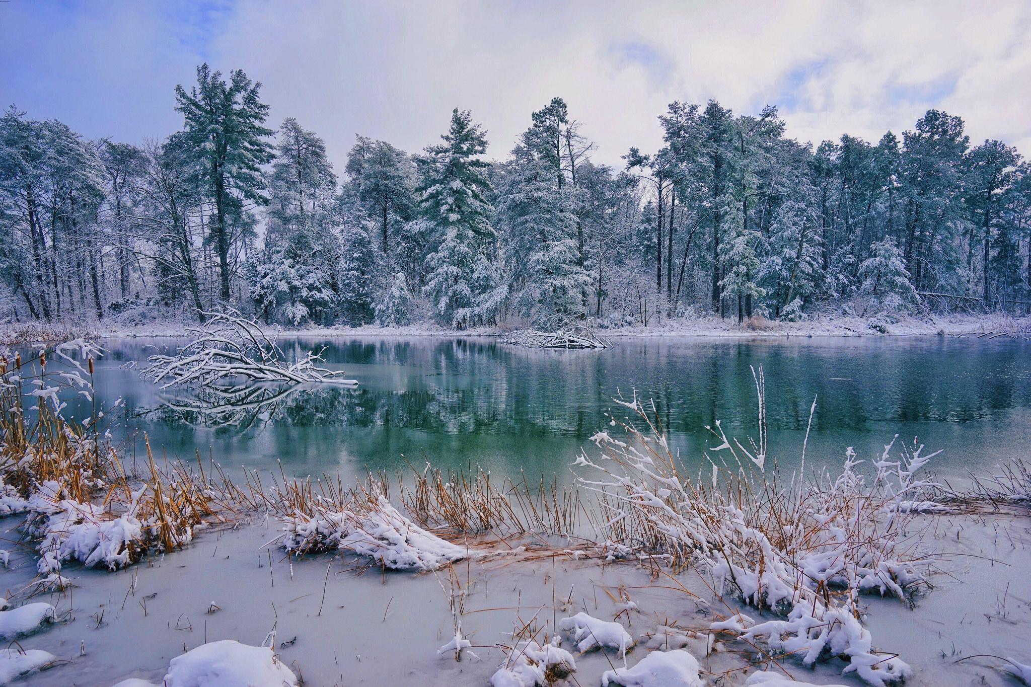обои озеро, лес, деревья, зима картинки фото