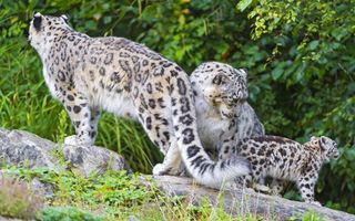 Фото бесплатно кошки, лес, природа