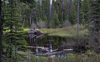 Бесплатные фото болото,лес,елки,вода