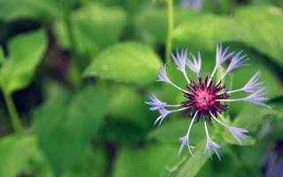 Бесплатные фото цветок,лепестки,голубые,пестики,тычинки,листья,зеленые