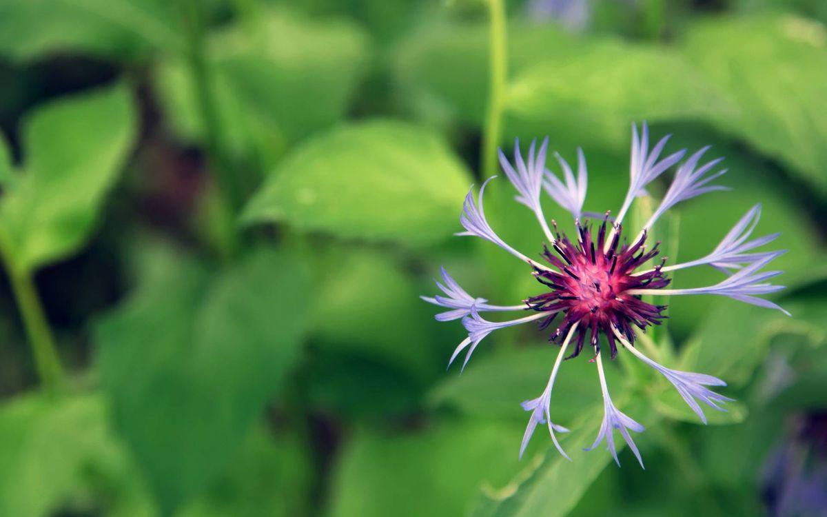 Фото бесплатно цветок, лепестки, голубые - на рабочий стол