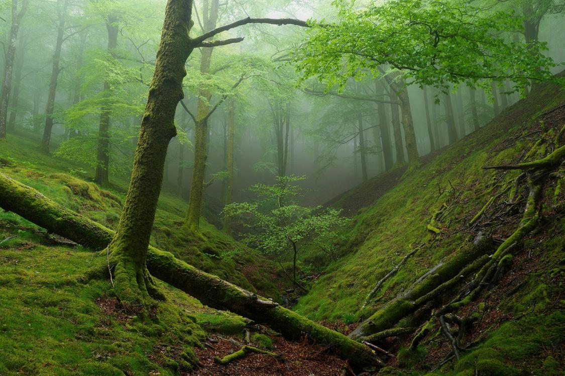 Фото деревья, туман - обои на стол