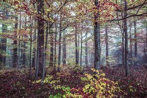 Фото бесплатно осень, лес, деревья, природа