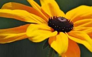 Бесплатные фото цветок,лепестки,желтые,пестики,тычинки,стебель