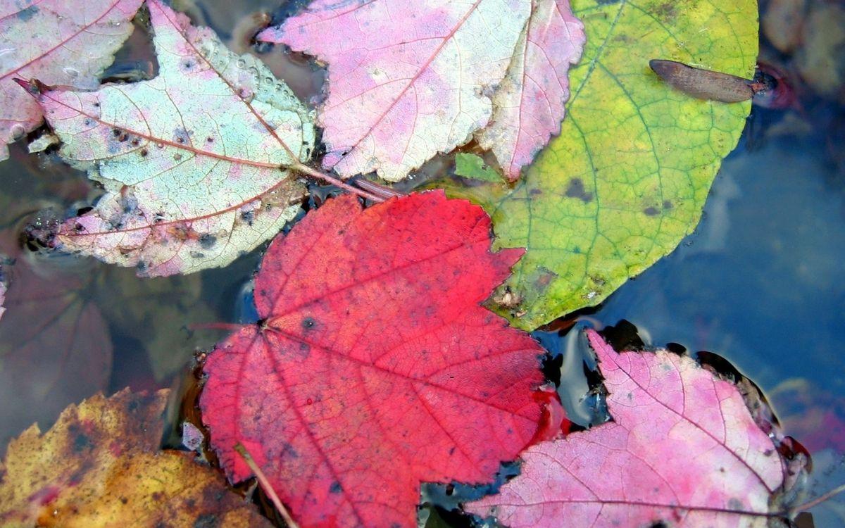 Фото бесплатно вода, листья, цветные - на рабочий стол