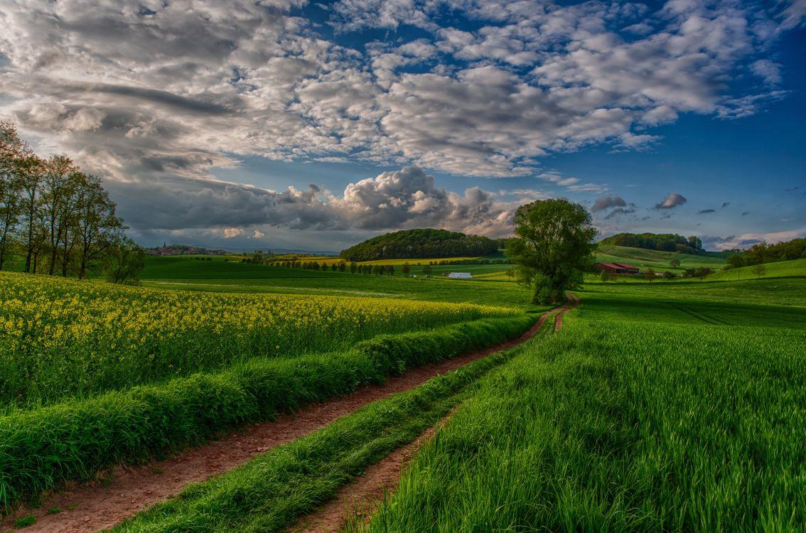 Фото бесплатно nature, landscape, scenery, view, sky, sunset, field, trees, clouds, beautiful, природа, пейзаж, вид, небо, закат, пейзажи