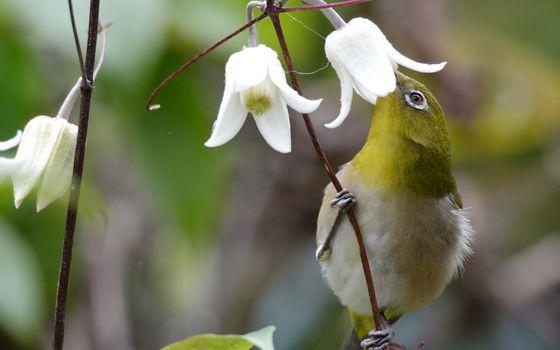 Бесплатные фото птичка,перья,лапки,ветви,цветы,белые