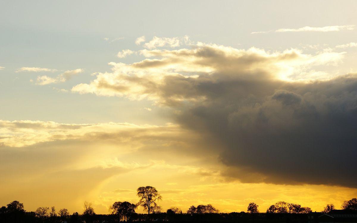 Фото бесплатно вечер, деревья, макушки, небо, облака, закат, пейзажи