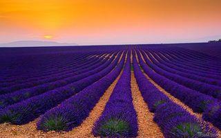 Фото бесплатно поле с лавандами, простор, горизонт, горы, закат, фиолетовые цветы