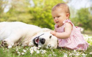 Фото бесплатно девочка и собака, природа, отдых
