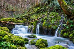 Бесплатные фото лес,деревья,река,водопад,камни,мох,природа