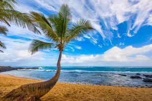 Бесплатные фото море,пальмы,пляж,пейзаж