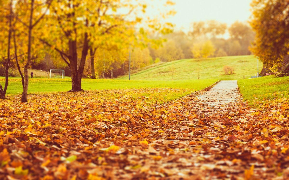 Фото бесплатно осень, парк, стадион, человек, ворота, деревья, трава, дорожка, листва, пейзажи