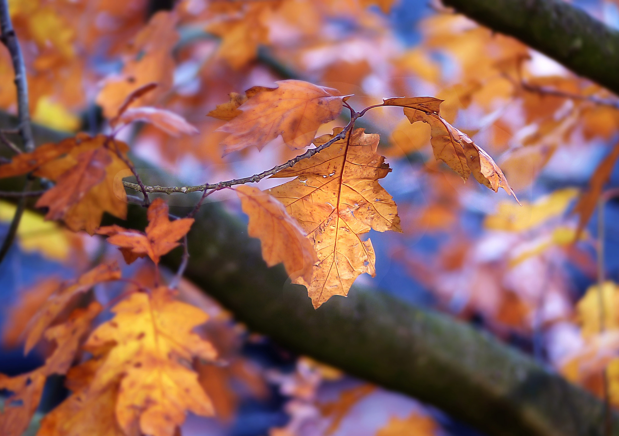 Обои дерево, ветка, листья, осень