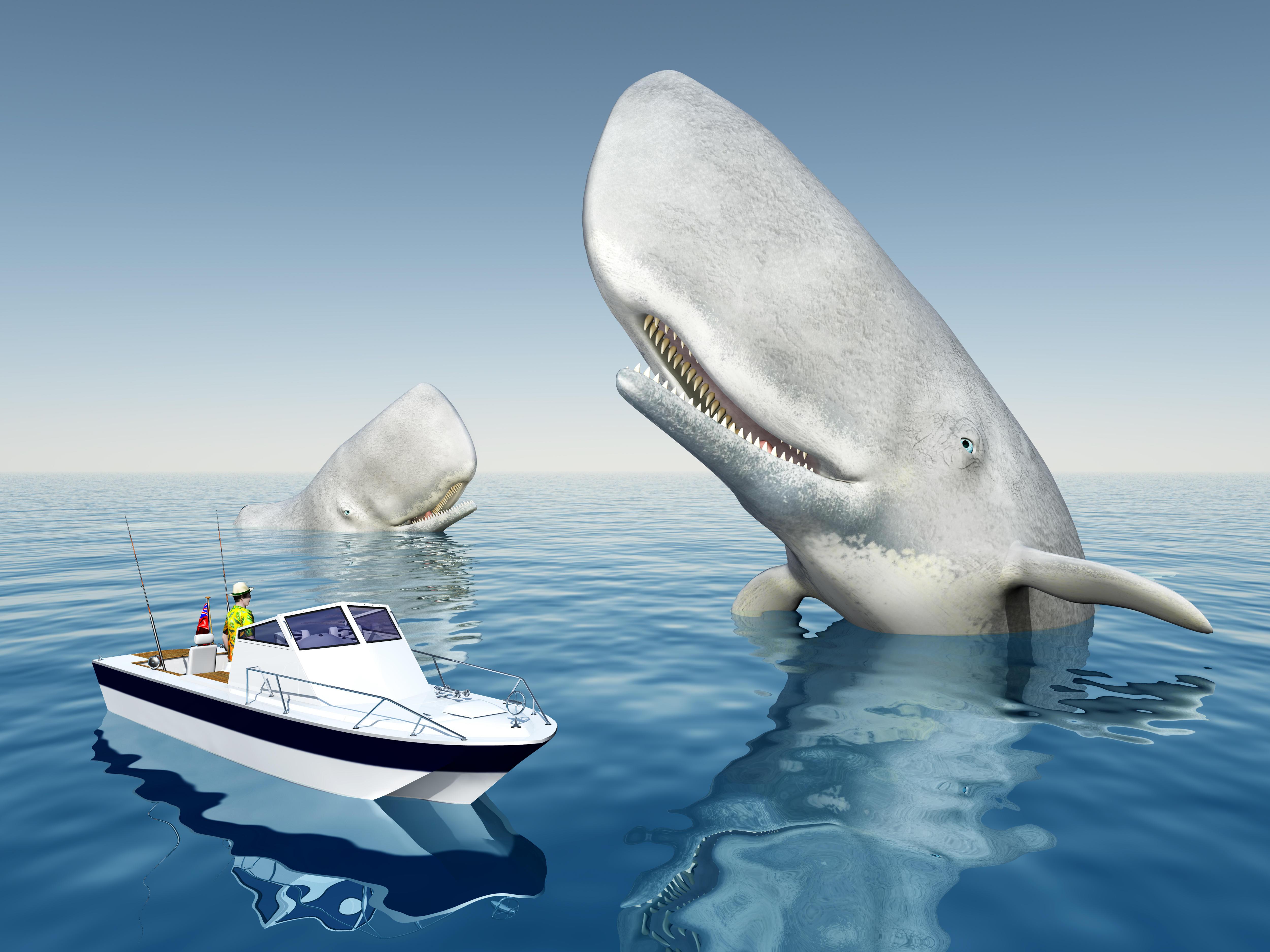 обои кит, хищник, оскал, опасность картинки фото