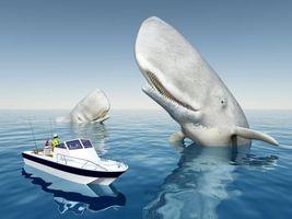 Фото бесплатно опасность, кит, улыбка