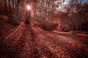 Заставки осень,лес,парк,дорога,деревья,пейзаж