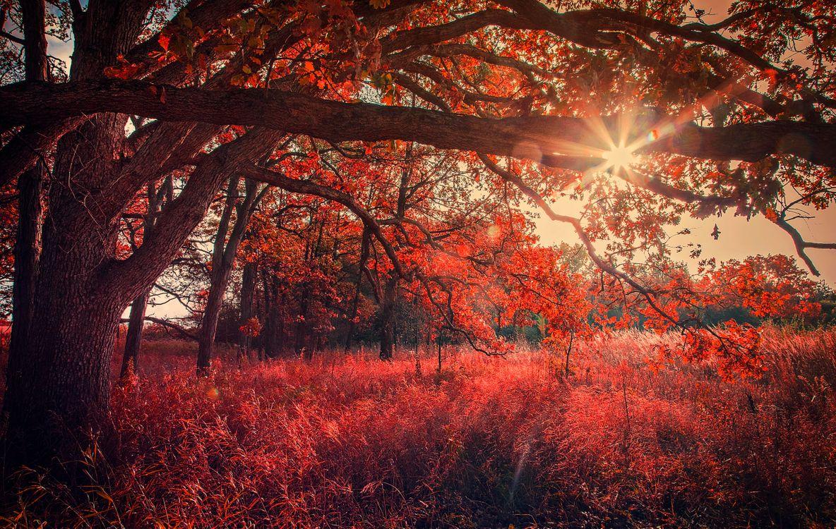 Фото бесплатно осень, солнце, лучи - на рабочий стол