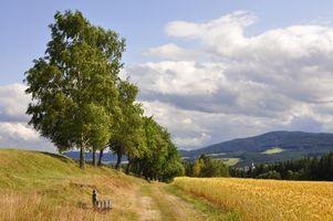 Бесплатные фото поле,колосья,дорога,деревья,пейзаж