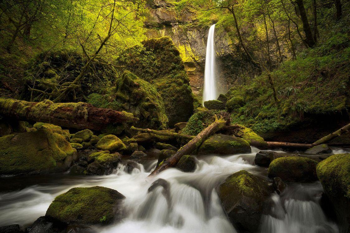 Обои лес, деревья, скалы картинки на телефон