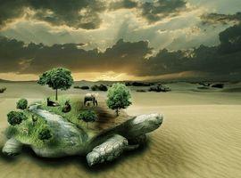 Бесплатные фото сюрреализм, фантасмагория, 3d, art, черепаха
