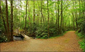 Бесплатные фото Great Smoky Mountain National Park,лес,речка,деревья,дорога,мост,природа