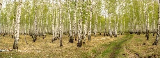 Заставки лес, деревья, дорога