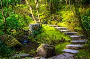 Обои японский сад, деревья, ступеньки, пейзаж