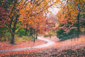Бесплатные фото осень,парк,тропинка,деревья,лес,фонарь,пейзаж