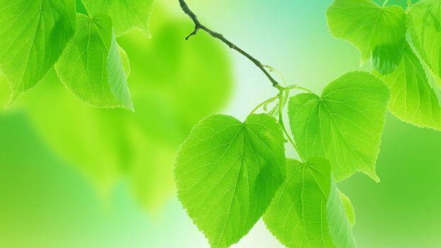Photo free jacket, leaves, green