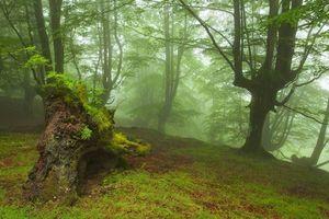 Скачать картинку туман, лес для рабочего стола бесплатно