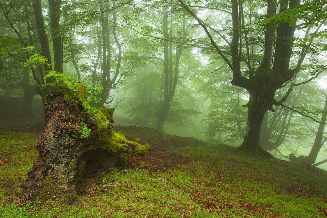 Фото бесплатно лес, деревья, туман, природа, природа