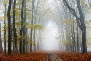 Заставки осень,лес,деревья,дорога,туман