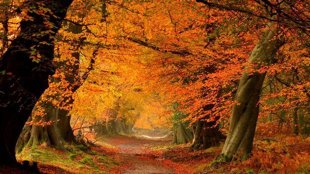 Бесплатные фото осень,роща,деревья,листва,желтая,тропинка