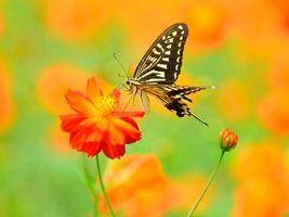 Заставки цветок,бабочка,макро
